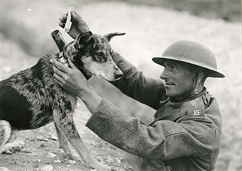 J'ai Vu, World War 1, Messenger pigeons | Verdun, Ww1 ... |Wwi Messenger
