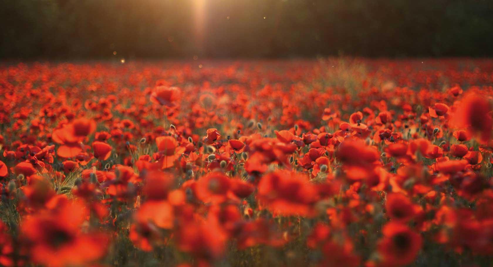 rememberance day - photo #7